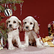 1960s Two Cocker Spaniel Puppies Poster