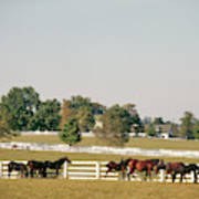 1990s Small Group Of Horses Poster