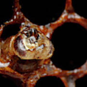 A Honeybee Hive After Colony Collapse Poster