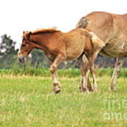 A Mare And Her Colt Poster by Penny Neimiller