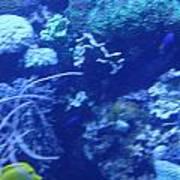 Aquariums Poster