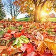 Autumn Fall Landscape In Park Poster