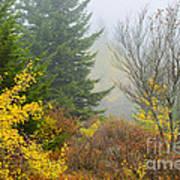 Autumn Fog Dolly Sods Poster