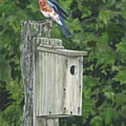 Backyard Bluebird 2 Poster