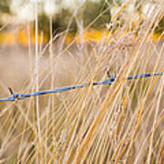 Barb Wire Country Fence Poster