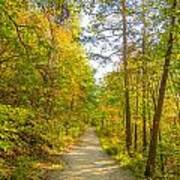 Beautiful Autumn Forest Mountain Stair Path At Sunset Poster