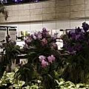 Beautiful Flowers Inside The Changi Airport In Singapore Poster