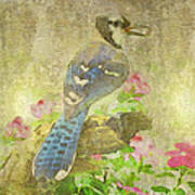 Blue Jay With Texture Poster
