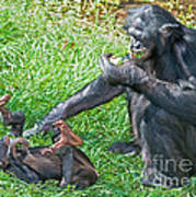 Bonobo Adult And Baby Poster