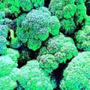 Broccolo Poster