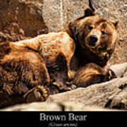 Brown Bear Poster by Chris Flees