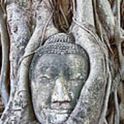Buddha Head In Tree Poster