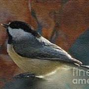 Chickadee In Autumn Poster