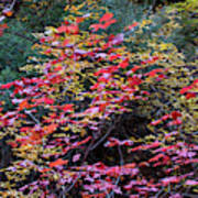 Colorful Leaves On A Tree Poster