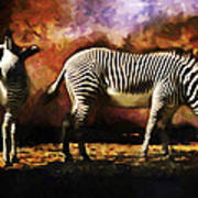 Creation Zebra Poster