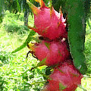 Dragon Fruit Tree Poster