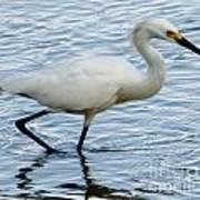 Coastal Egret Poster
