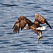 European Fishing Sea Eagle 4 Poster