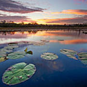 Everglades At Sunset Poster