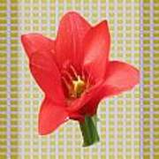 Exotic Red Tulip In Bold And Two Border Patterns Tiny Sparkle Parallal Horizontal Strips Summer Flow Poster