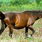 Florida Spanish Horse Poster