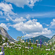 Franconia Notch - Lupine And Daiseys  Poster