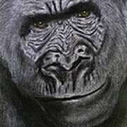 Gorilla Portrait Poster by David Hawkes