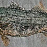 Gyotaku - Striped Bass - Rock Fish - Striper Poster