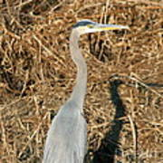 Heron In Shadow Poster