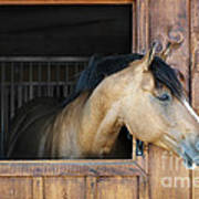 Horse In Stable Poster