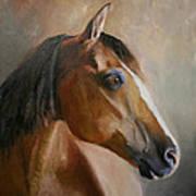 Horse Portrait II Poster