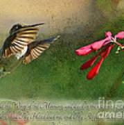 Hummingbird Morning With Verse Poster