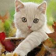 I Love Kittens Poster