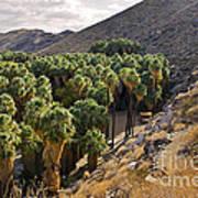 Indian Canyons - California Poster