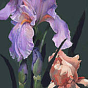 Iris Study Poster by Suzanne Schaefer
