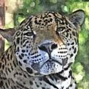 Jaguar 2 Poster