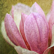 Japanese Magnolia Poster