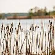 Lake Mattamuskeet Nature Trees And Lants In Spring Time  Poster