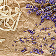 Lavender Flowers And Seeds Poster