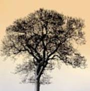 Lone Tree In Field Poster