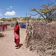 Maasai People And Their Village In Tanzania Poster