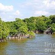 Mangrove Forest Poster by Carol Ailles