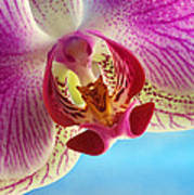 Pink Orchid Flower Details Poster