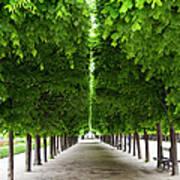 Palais Royal Trees Poster