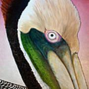 Pelican Peeking Poster