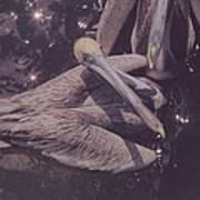 Pelicans Poster