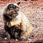 Pine Needle Kitty Poster