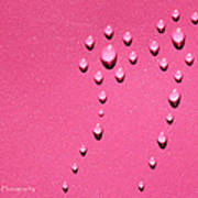 Pink Water Flower Poster by Kip Krause