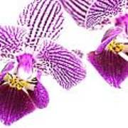 Purple Orchid-5 Poster