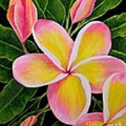 Rainbow Plumeria Poster
